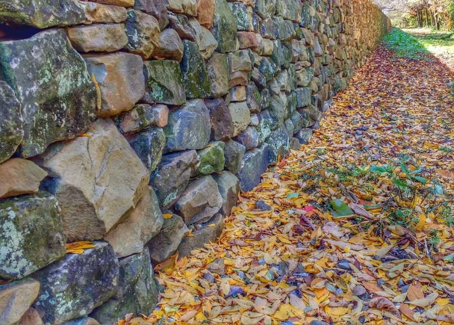 wall-fall-leaves