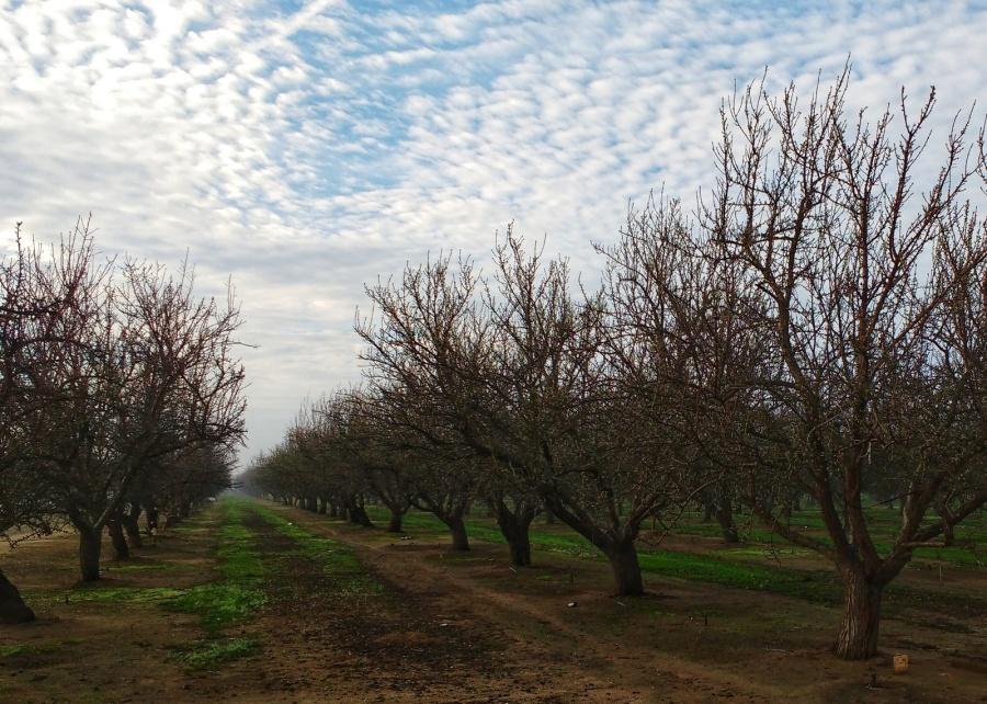 ca almond groves-01