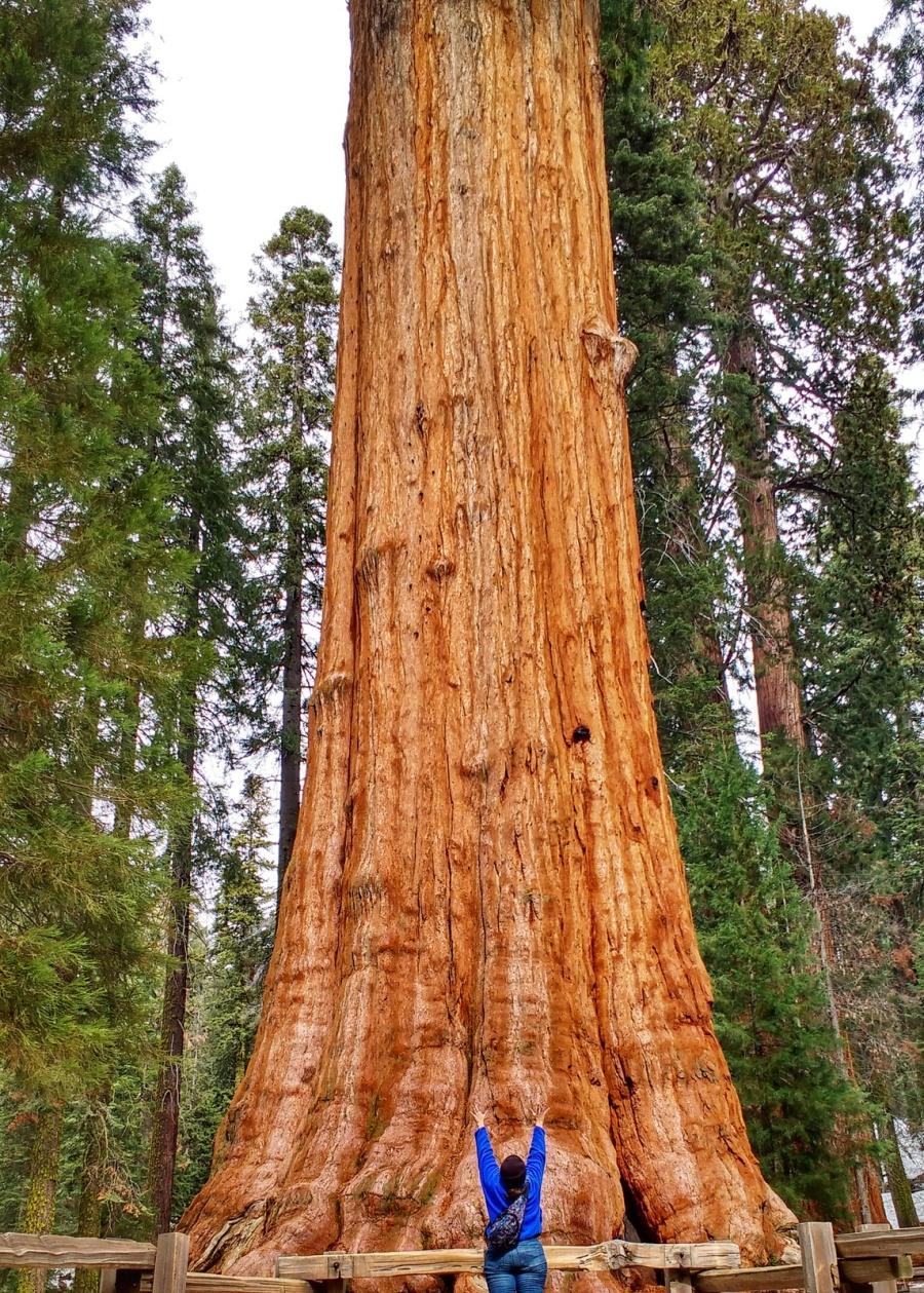 ca Sequoia big tree energy-01